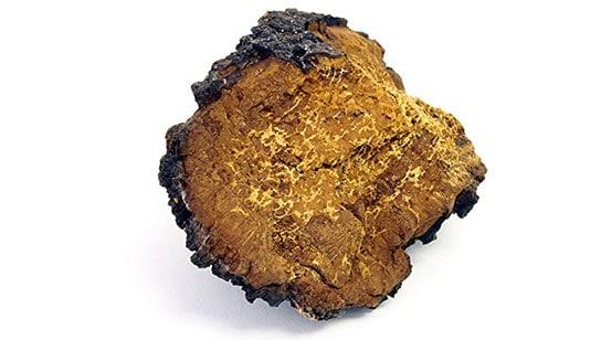 Mushroom Complex - chaga