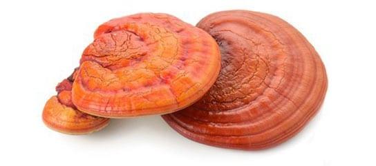 Mushroom Complex - reishi