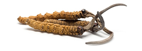 Mushroom Complex - cordyceps