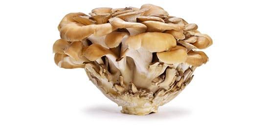 Mushroom Complex - maitake