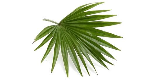 Male Complex - saw palmetto