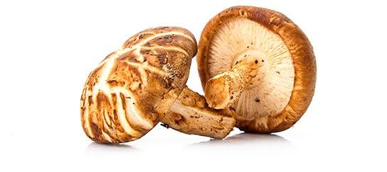 Mushroom Complex - shiitake
